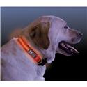 NiteDawg Lichtgevende Halsband Hond Medium