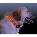 NiteDawg Lichtgevende Halsband Hond Small