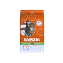 Iams Adult Lam 1,5 kg