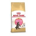 Royal Canin Maine Coon 36 Kitten 4 kg